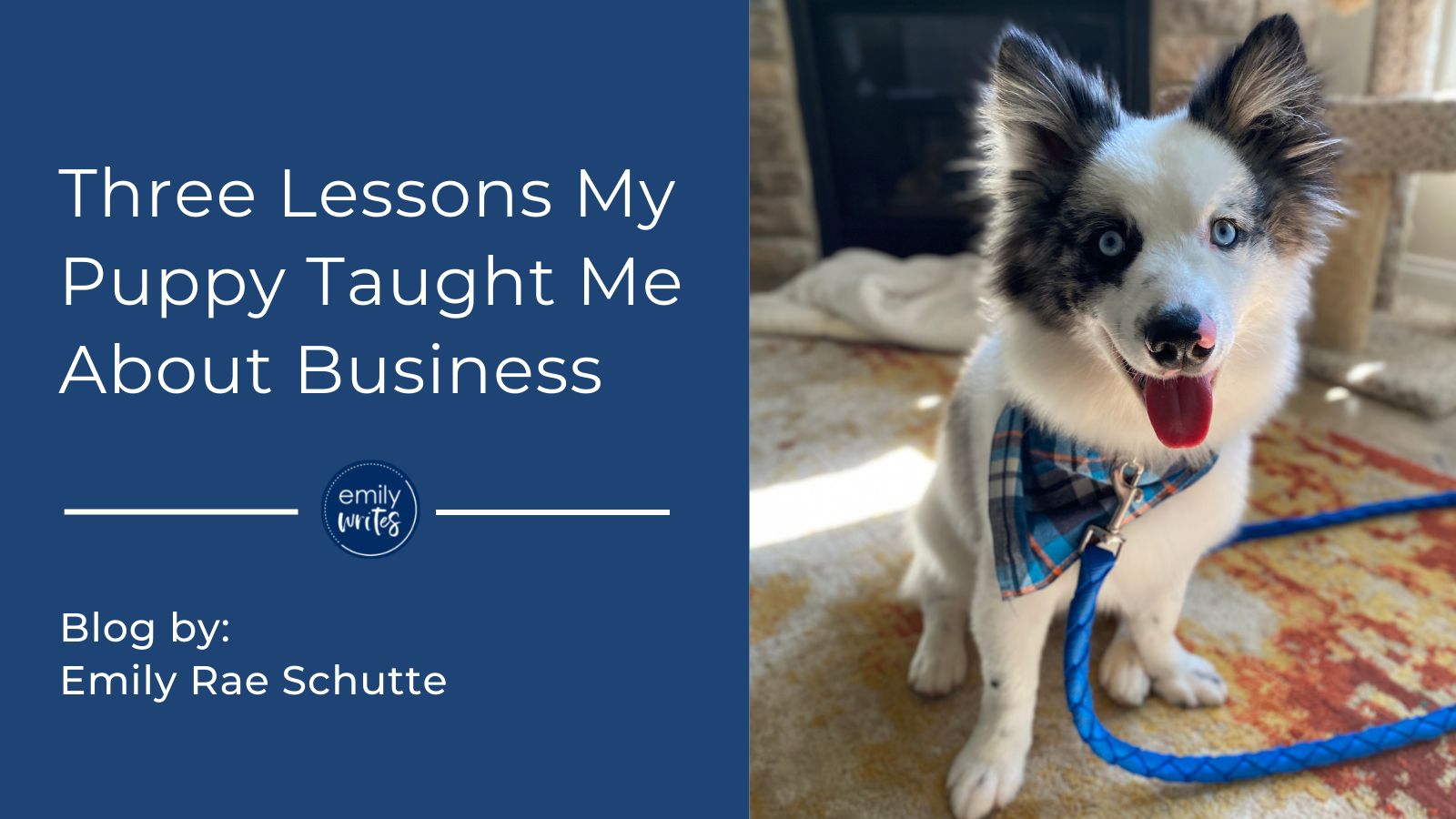 Three Lessons My Puppy Taught Me About Business