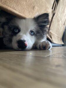 puppy under a bed